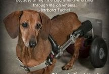 Nat'l. Walk 'N Roll Dog Day / Founded in August 2012 by award winning author and advocate for dogs with Intervertabral Disc Disease (IVDD) and dogs in wheelchairs, Barbara Techel created this day in memory of her beloved Dachshund, Frankie and in honor of all wheelchair dogs who teach us to embrace each day with love, hope and joy. www.nationalwalknrolldogday.com  You can also find us on Facebook!