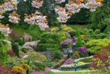 Public Gardens on Pinterest / A board for public gardens around the world to share what's happening in their gardens and inspire pinners to visit, enjoy, and emulate! Note: Guest pinners are responsible for ensuring that they have the legal right to pin the content they post on this board. / by Rodale's Organic Life