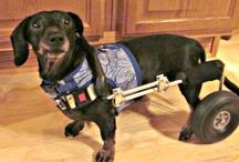 Joie: A Walk 'N Roll Dog
