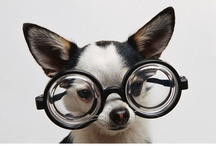 Lentes / Eyeglasses / by H.R.Olivar Financial Services