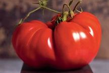All About Tomatoes / Growing, cooking, eating...what part of tomatoes don't we love? / by Rodale's Organic Life