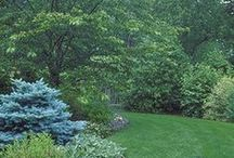 Yard and Lawn Care / Organic tips for a beautiful backyard.