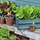 Container Gardening / Everything you need to know about growing flowers, fruits, herbs, and vegetables in pots.
