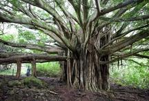 ☮ Trees ☮