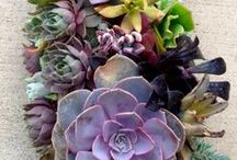 my plant obsession / by Jill Enebo