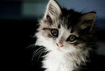 Cute Animals / by Cristina Quattlebaum