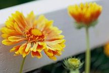 Gardening / by Anne Dovel