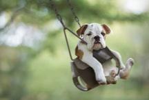 dogs / by Elizabeth Waynick