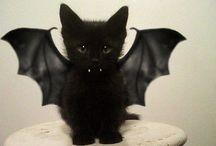 holiday: halloween / Spooky stuff