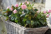 Garden Love / Please pin from this board with consideration. It takes me a long time to put these together.  / by Debbie Halkett