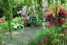 Gorgeous Gardens / by Cheryl Kelly