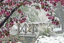 Winter / by Cheryl Kelly