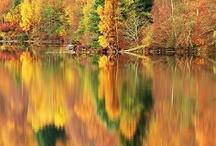 Autumn / by Cheryl Kelly