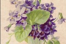 Vintage Violets / Please pin from this board with consideration. It takes me a long time to put these together.