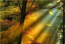 Lighting the World / by Cheryl Kelly