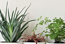 House & Home - Plants / by Camilla Forsberg
