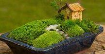 bonsai / inspiration, tutorials