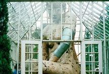 Glass Houses / Glasshouses and greenhouses, sunrooms, conservatories / by Rebecca Sherman