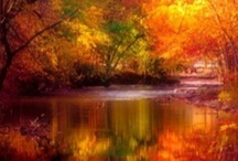 I love Fall / by Georgie~ Cupcake Stand