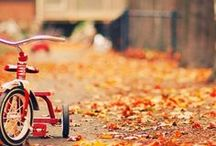 Autumn / by Christine Johnson