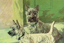 Cairn Terriers / by Kelly Stern