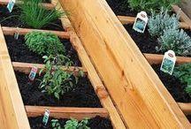Gardening like a rock star / by Serina Lyman Westphal