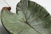 Concrete Leaf Castings / Leaf castings made from portland cement and sand.