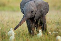 Animals  / by Alaina Bork