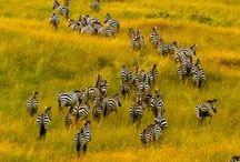 Travel - Africa / Beautiful travel destinations in Africa