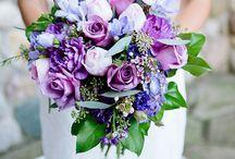 Ally + Julie's Wedding / by Amanda Eggan