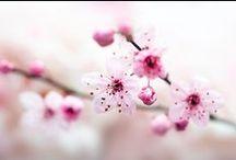 Photography: Flowers & Macro / Beautiful photos of flowers and macro photography (mainly of flowers)