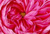 Flowers / by Patricia W