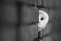 Owls / by Ana Mnemosine