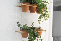 Gardening / by Desiree Sucar