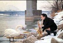swan(world & Japan ) 2 / swan(world & Japan ) 2 / by Rider Egao