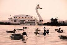 swan(etc.) 3 / swan(etc.) 3 / by Rider Egao