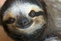Adorable Animals / Cute and fun animal photos to make you smile
