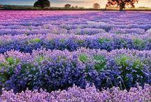 Beautiful Flowers / flowers, nature, garden, beauty, nature