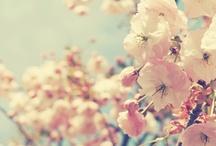 ★Lentefris★ / Spring