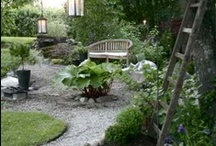 Garden and Patio  / by Stef fi Specht
