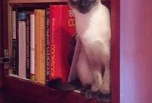 Library Cats / I love books and I love cats. :)