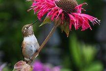 Feathered Friends / Bird photos