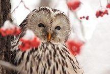 H O O T I E : W H O O O ? / all things owl-ish