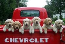 cute puppies / by Barbara Burril