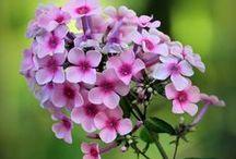 My Flower Garden / Inspiration for my dream flower garden.