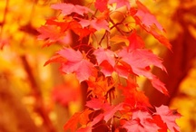 The Best Season of All... Fall! / by Erin Roberts