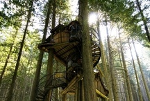 Treehouses / If I could I would live in a house in a tree. That would be THE COOLEST THING EVER.