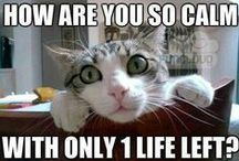 Funny Cat Pictures with Captions / For cat lovers who need a laugh, this board has funny cat pictures with captions. Sure to entertain anyone who has ever lived with a feline and lived to tell the tale.