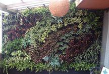 Jardin vertical / Eco cuadros. Arte vivo. Jardines verticales.