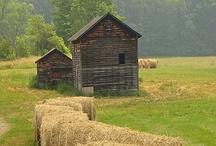 Farm / by Andrea